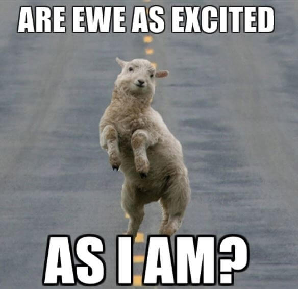 Are Ewe as Excited as I Am - Sheep Meme