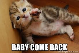 baby come back kitty